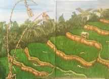 Bali Journal - Rice Fields