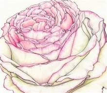 Rose - Cropped (324 x 284)